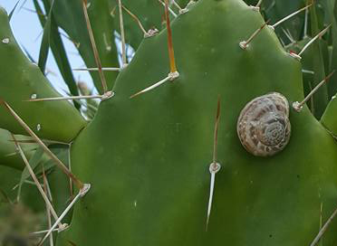 slug-on-cactus-2