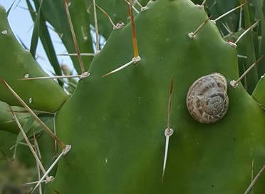 slug-on-cactus-2